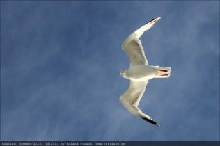 england2013-ferry-dover-calais-6678